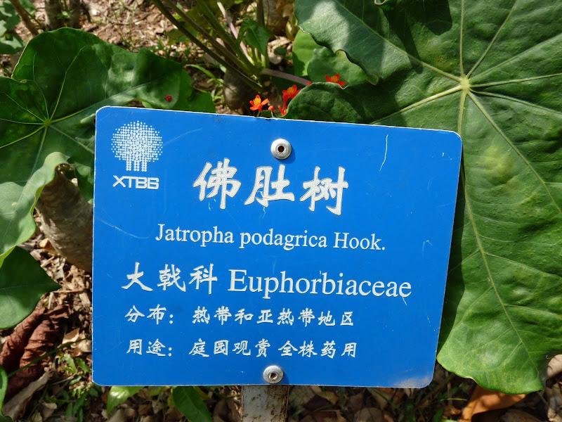 Chine .Yunnan . Lac au sud de Kunming ,Jinghong xishangbanna,+ grand jardin botanique, de Chine +j - Picture1%2B621.jpg