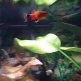 Fish - IMG_20121015_192548.jpg