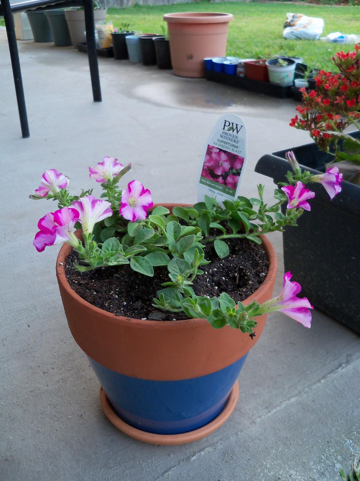 Gardening 2010, Part Two - 101_2032.JPG