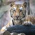 As Thousands Of U.S. Businesses Close For Good, Congress Focuses On Tiger Ownership, Legalizing Marijuana