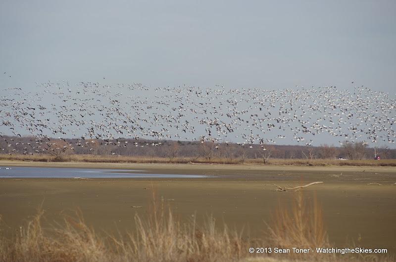 01-19-13 Hagerman Wildlife Preserve and Denison Dam - IMGP4101.JPG