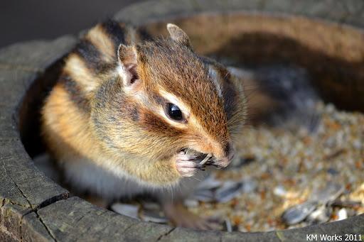Cute Squirrel   2011-10   Photo