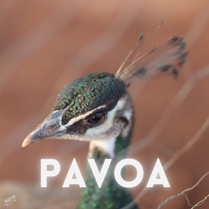 "Escute ""Pavoa"", EP de estreia do projeto musical patense Skate Toy"