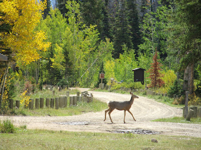 A visitor to the Potter's Ponds campground