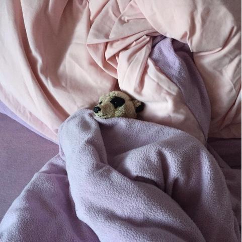 Kuscheltier schläft im Bett