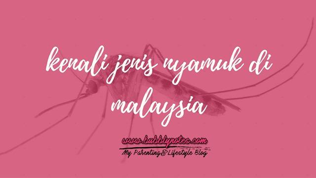KENALI JENIS NYAMUK DI MALAYSIA