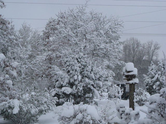 2010 - 2011 Winter - IMG_0679.JPG