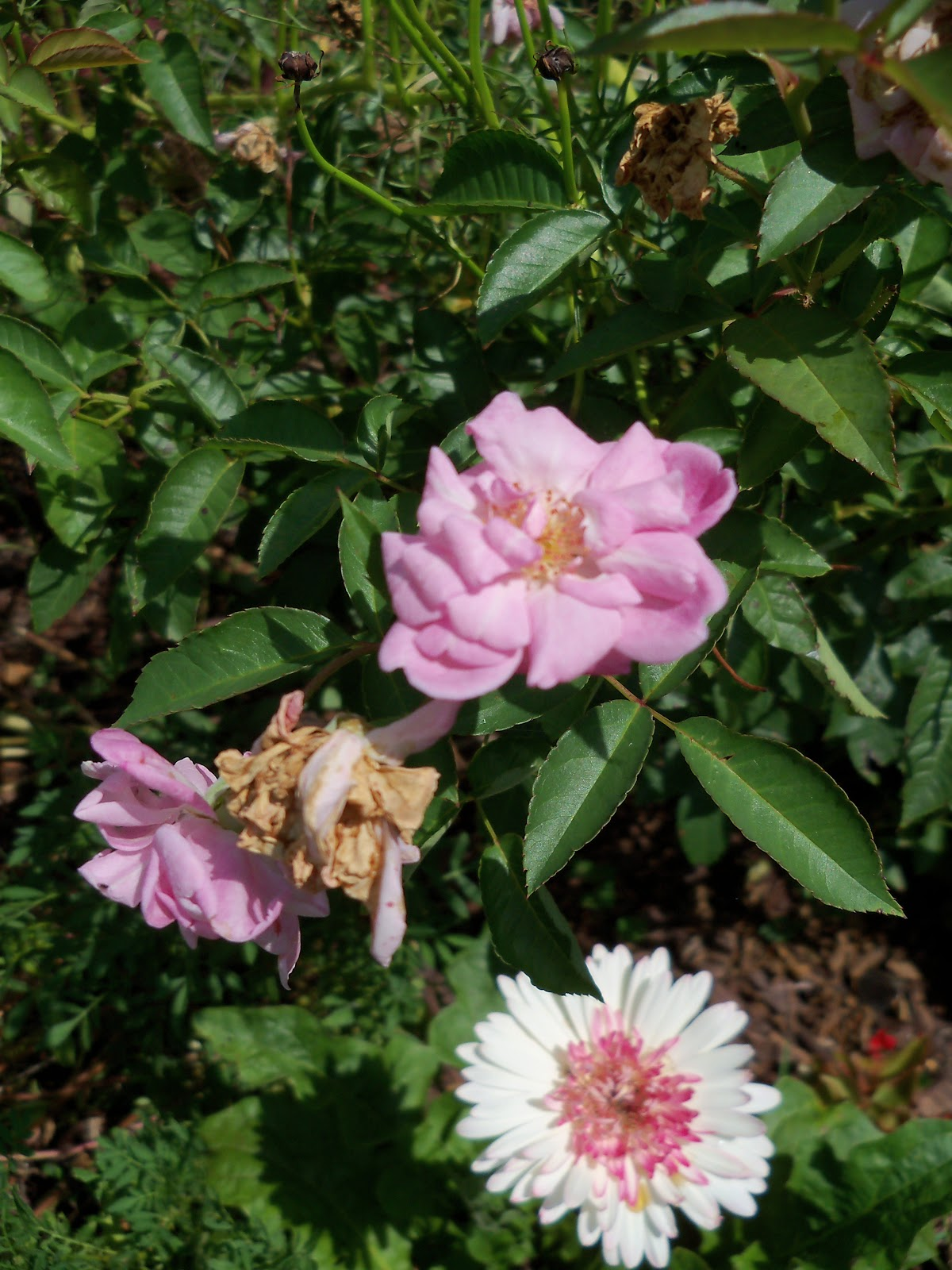 Gardening 2010, Part Three - 101_5099.JPG