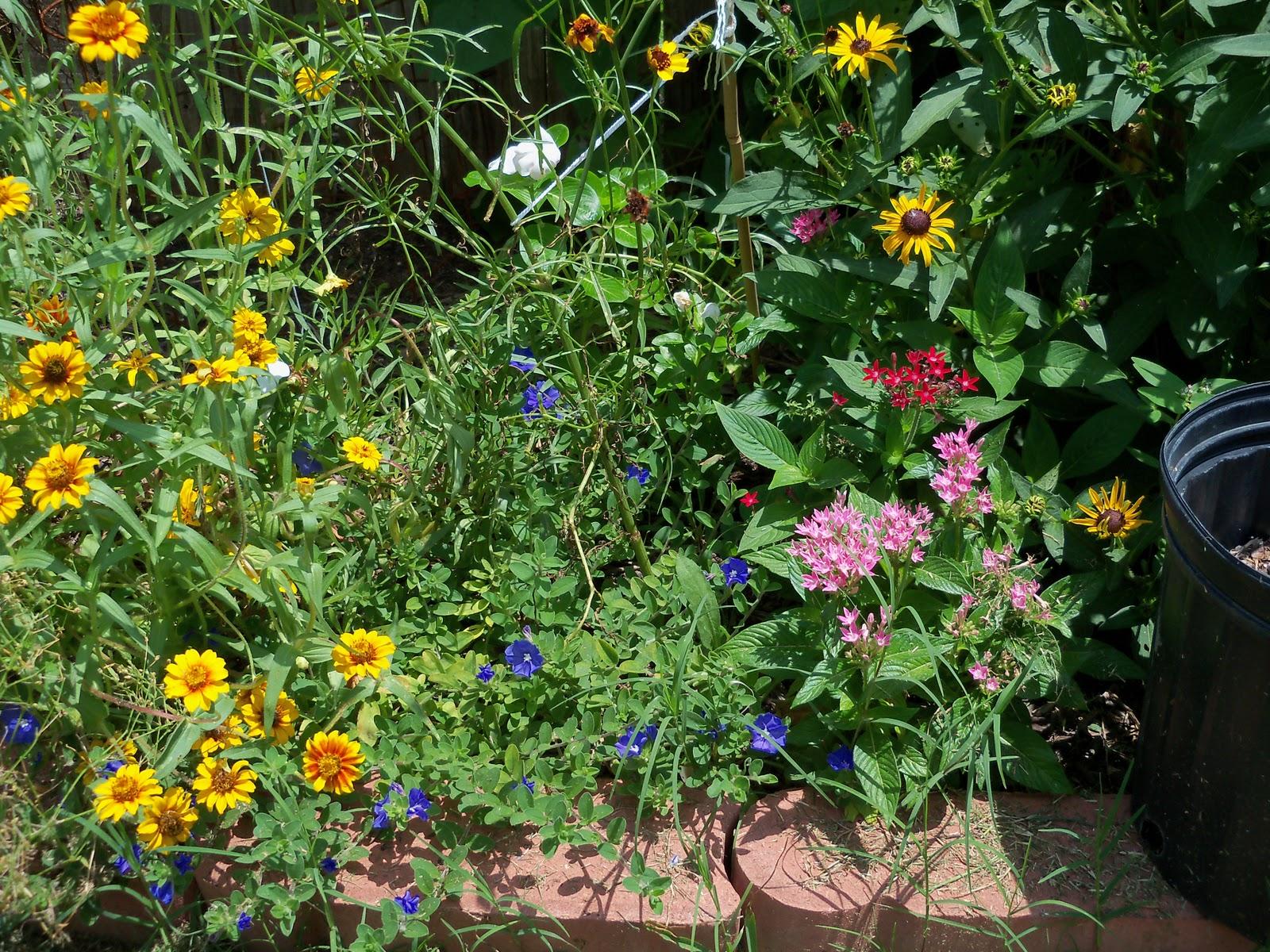 Gardening 2010, Part Three - 101_4847.JPG