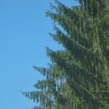 Taborjenje, Lahinja 2005 1. del - img_1099.jpg