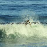 _DSC5829.thumb.jpg