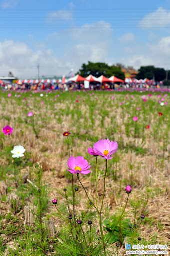 2014小麥文化節 - 麥田裡的花與攤位區