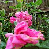 Gardening 2014 - 116_1830.JPG