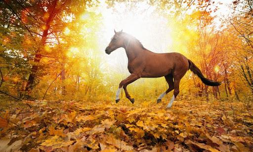 馬のパズル