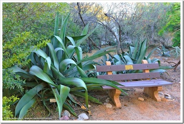 151230_Tucson_Tohono-Chul-Park_0019_Agave-weberi