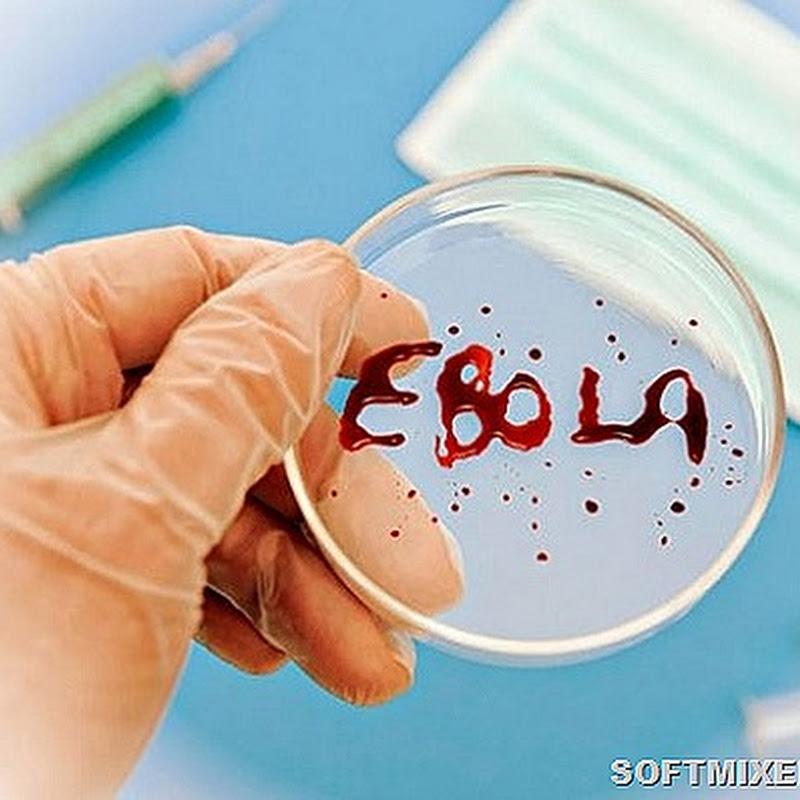 """Куда подевалась лихорадка """"Эбола"""""""