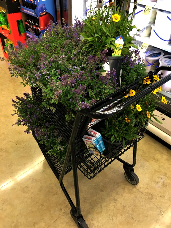 [Nepeta+in+the+shopping+cart%5B12%5D]