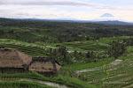 2015.02.01 - Jatiluwih, Bali