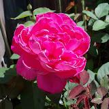 Gardening 2013 - 115_6198.JPG