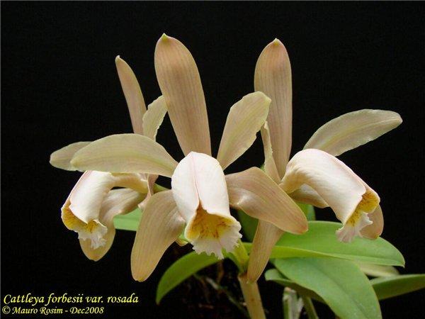 Растения из Тюмени. Краткий обзор - Страница 2 62c614abe93a