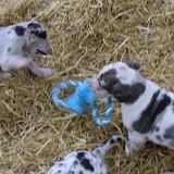 Thelma & Garths 3/21/12 litter - SAM_3230.JPG