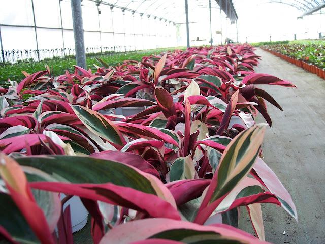 Cultivo de plantas de interior. - 100_1474.JPG