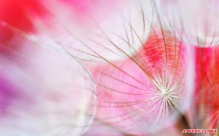 Hình ảnh đẹp hoa Bồ Công Anh lãng mạng sâu lắng