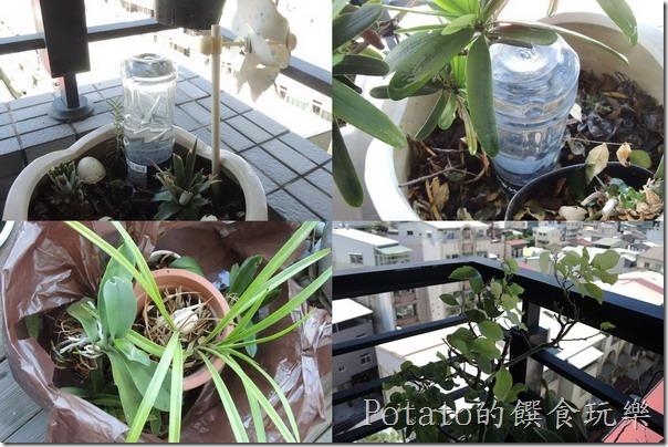 出國好幾天,植物的水分補充方法