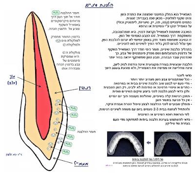 """הלבנת שיניים - עצות והסברים, ד""""ר גיא וולפין, אסתטיקה דנטלית ושיקום הפה"""
