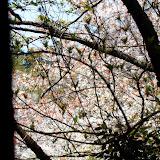 2014 Japan - Dag 7 - tom-SAM_0460-0030.JPG