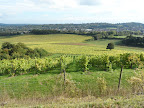 Denbies Vinyard  Oct 2013 .jpg