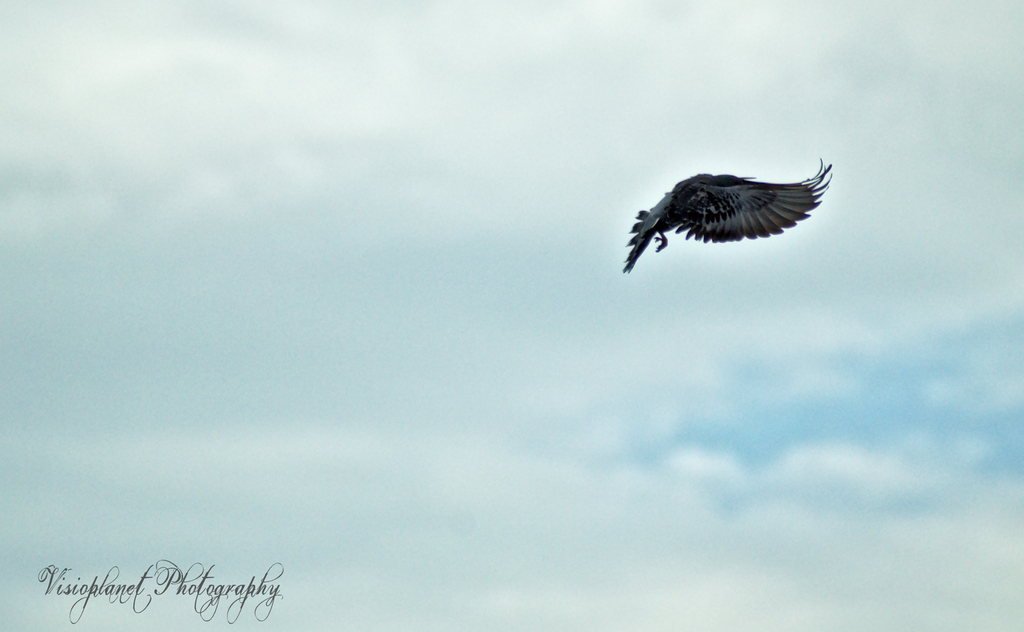 Fly away by Sudipto Sarkar on Visioplanet
