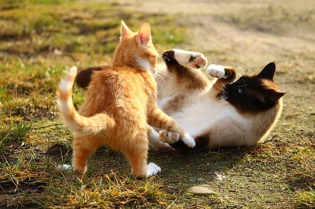 Cat 1184736 640