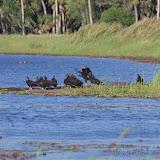 04-06-12 Myaka River State Park - IMGP9919.JPG