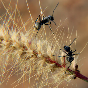 Play time by Ridzwan Mohd Nor - Nature Up Close Leaves & Grasses ( nature, ants, flowers )