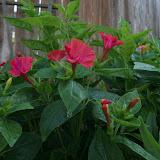 Gardening 2012 - IMG_2942.JPG