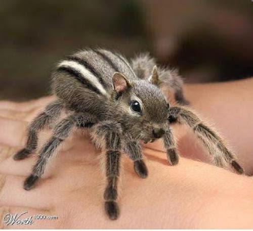 Frightful Fridays Spider Squirrel