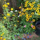 Gardening 2010, Part Three - 101_5159.JPG