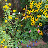 Gardening 2010, Part Three - 101_5159.JPG