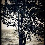 20120529-01-shadow_beneath_tree.jpg