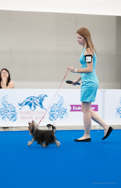 World Dog Show-2016 0145