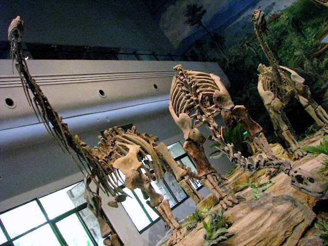 Dinosaurs greet us as we enter the Zigong Dinosaur Museum