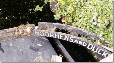 6 moorhen nest