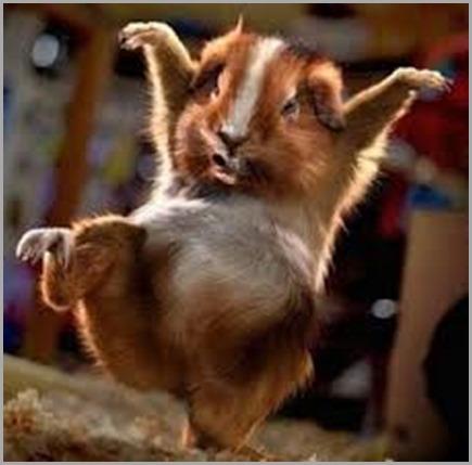 dancing_hamster-725dac1ead052bed9a89c8f2d6ca90ba.jpg