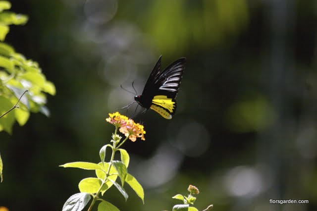 Birds & Butterflies - IMG_1658_2.jpg