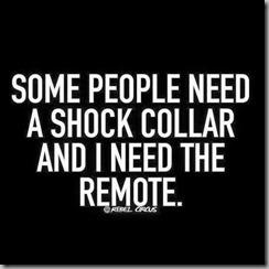 shock collar 2