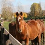 Rue d'Orville : chevaux