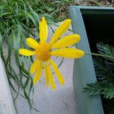 Gardening 2010 - 101_0575.JPG