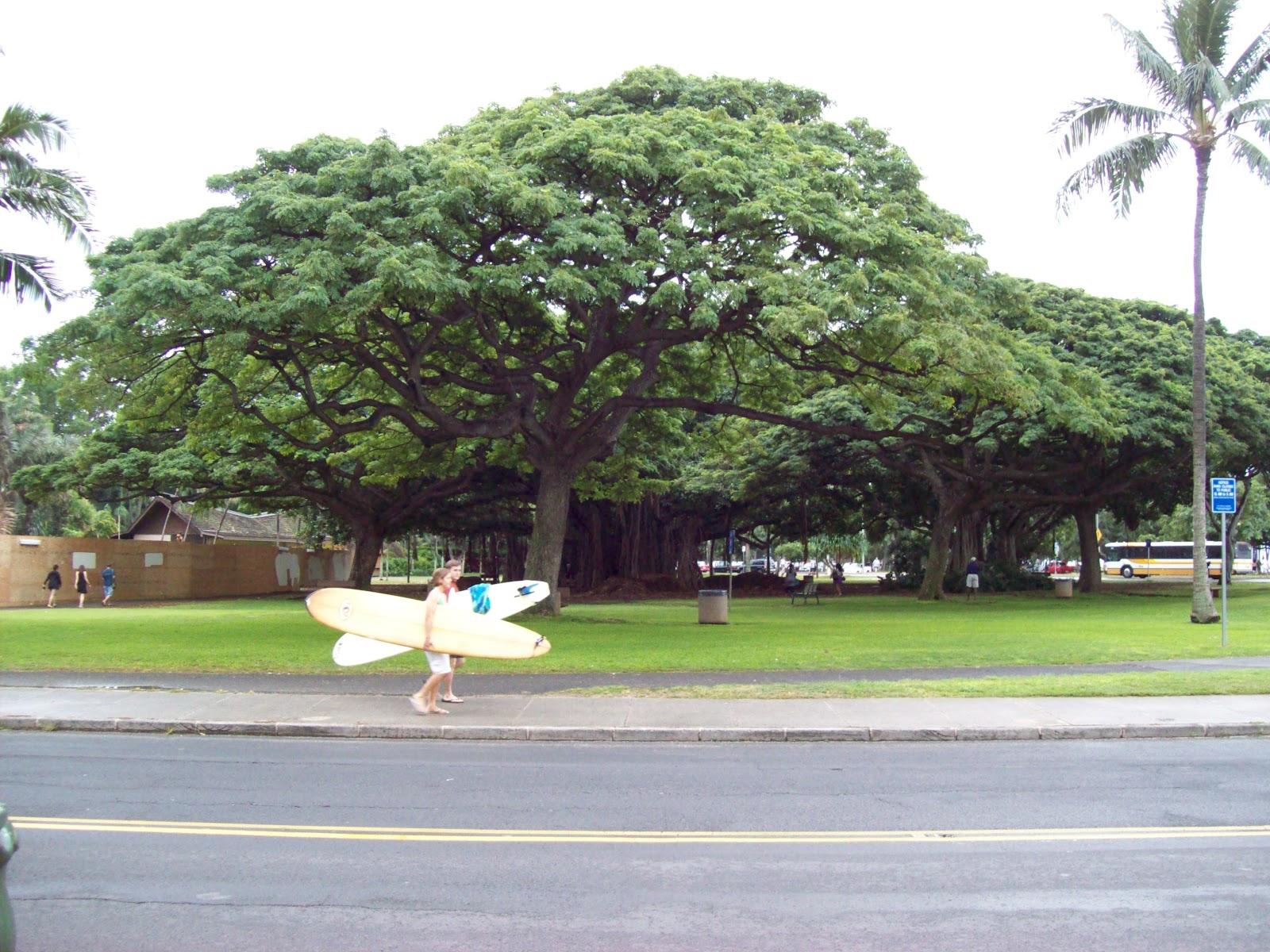 Hawaii Day 1 - 100_6452.JPG