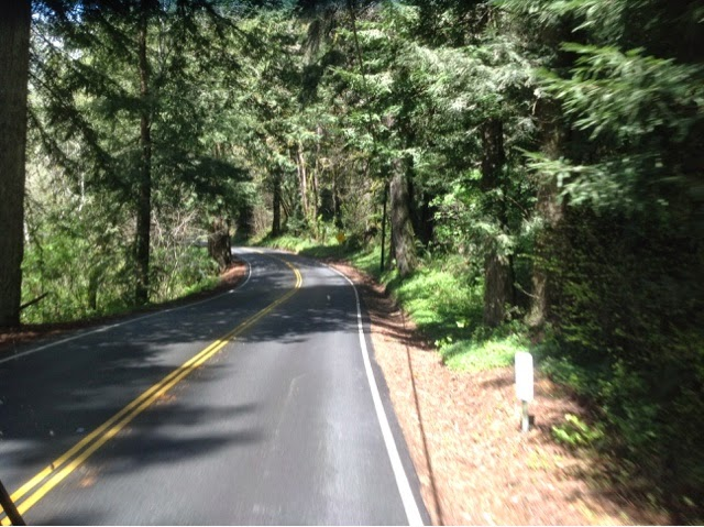 Redwoods along California Highway 197